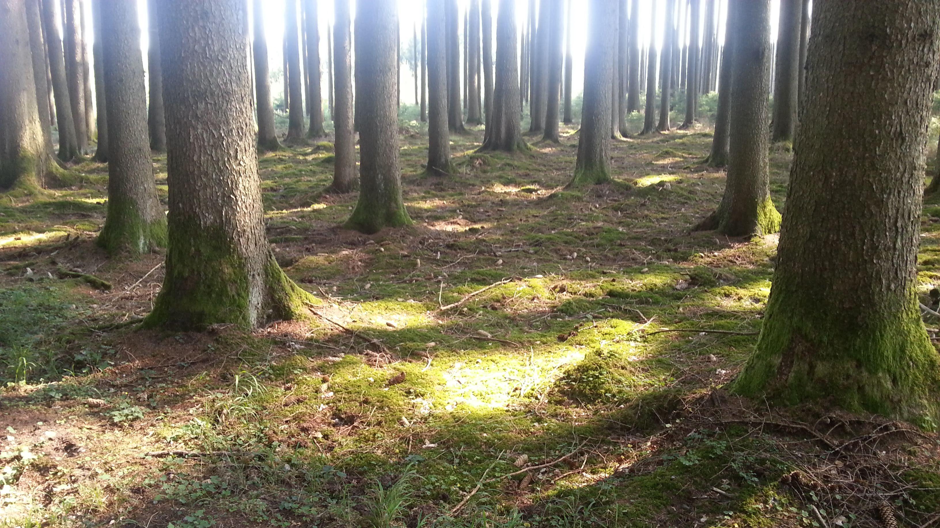 Im Wald bei Konradshofen